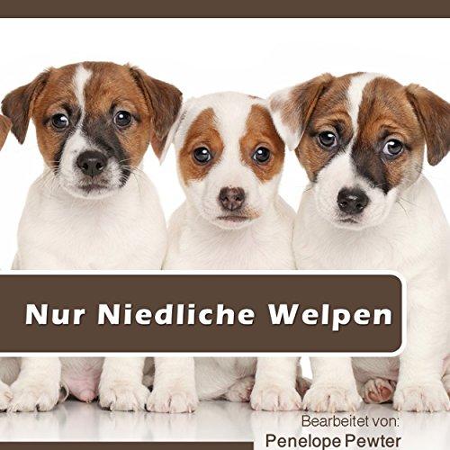 Nur Niedliche Welpen: Welpen Fotos und Hund Angebote für Hundeliebhaber