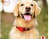 GPS TRacking Hund